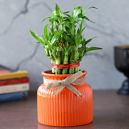 2 Layer Bamboo Plant In Orange Lining Pot:Bamboo Plants