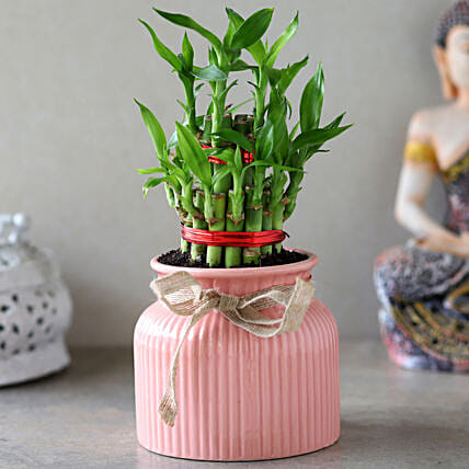 2 Layer Bamboo Plant In Pink Lining Pot
