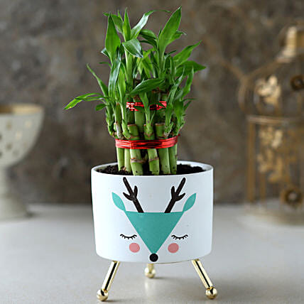 2 Layer Bamboo Plant In White Green Reindeer Pot