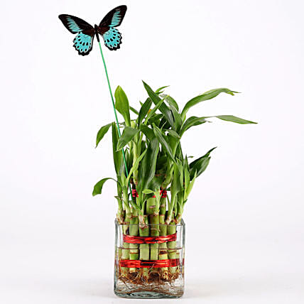 bamboo plant for her:Desktop Plant