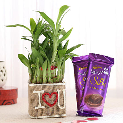 Chocolate and Plant Vase Online