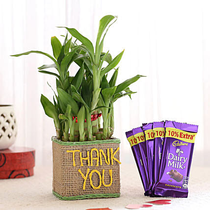 Thank You Plant with Chocolate Online