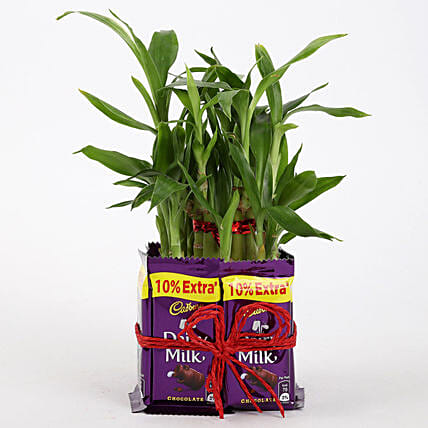 Plant with Dairy Milk Online