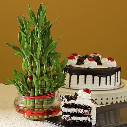 Online Black Forest Cake With 3 Layer Bamboo Plant