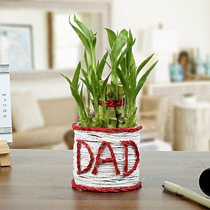 2 Layer Lucky Bamboo Plant for Dad:Tropical Plant Gifts