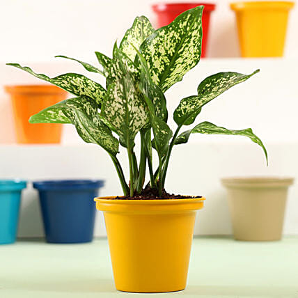 Air purifying Plant Online:Metal Planters Delivery