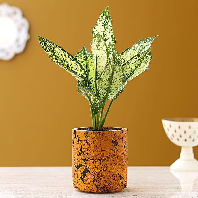 Aglaonema Silver Plant In Pipe Shaped Cork Pot
