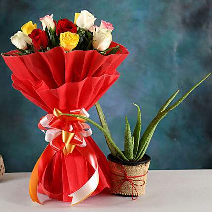Order Aloe Vera Plant And Rose Bouquet