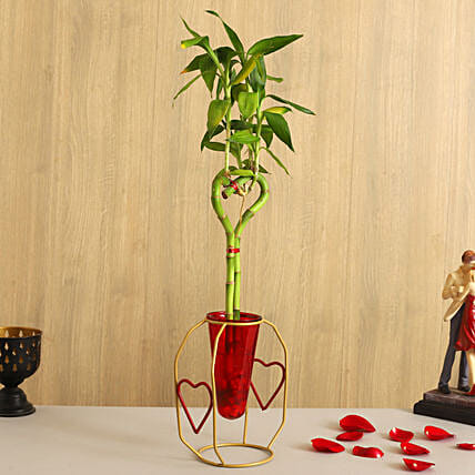 Bamboo Heart Stick Plant In Red Cone Golden Stand