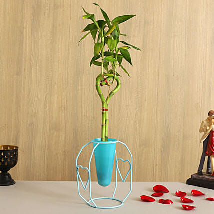Bamboo Heart Stick Plant In Sky Blue Cone With Stand