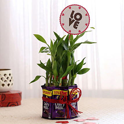 Plant N Chocolate Romantic Gift Online