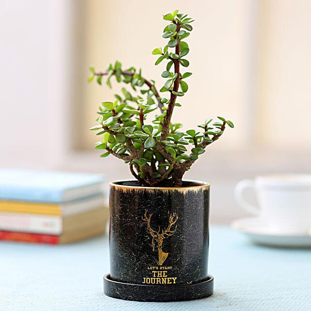 Black Pot of Jade Plant