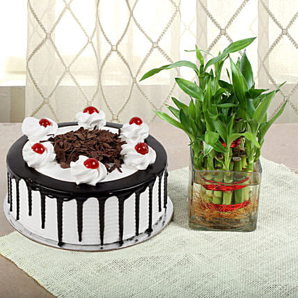 Blackforest cake with 2 Layer Bamboo:Lucky Bamboo for Birthday