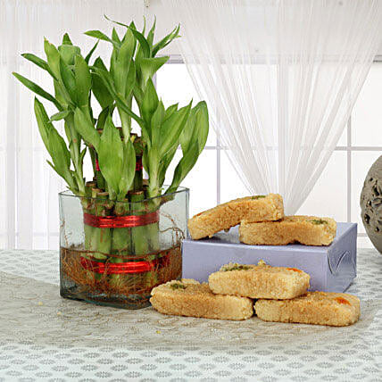 Lucky bamboo and  combo:Send Lucky Bamboo for Mothers Day