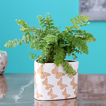 Boston Fern in Golden Planter