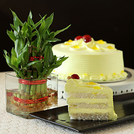 2 Layer Bamboo with Cake:Fathers Day Gifts Combo
