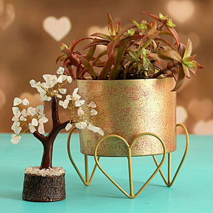Campfire Plant In Gold Finish Pot Wish Tree