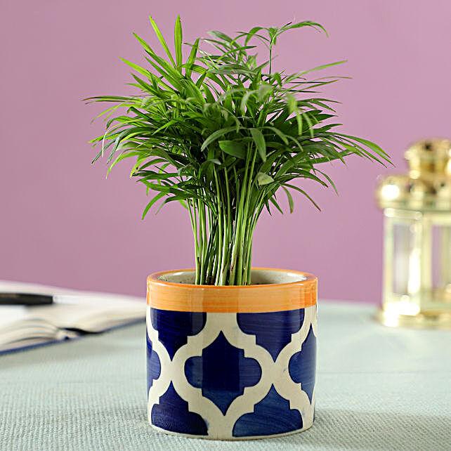 green leaf plant online