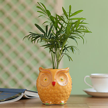 palm plant in owl shaped planter