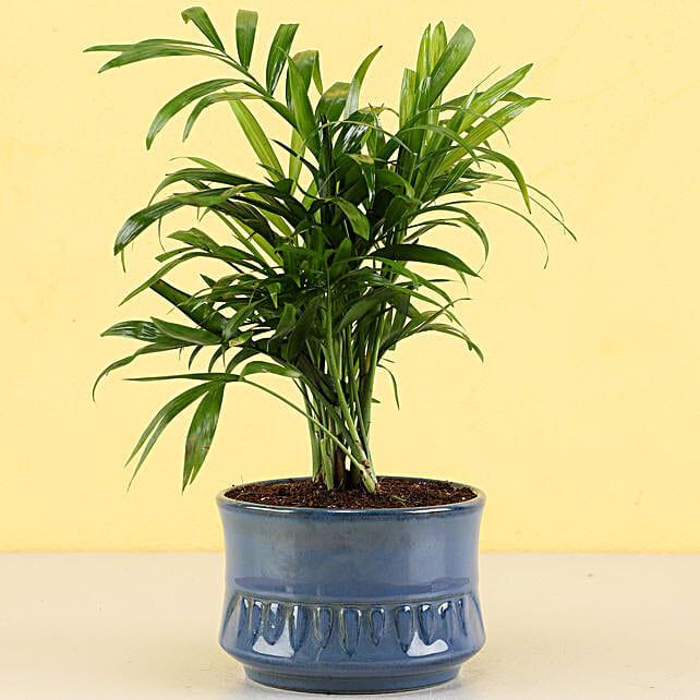 online indoor plants for home