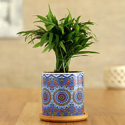 Chamaedorea Plant In Blue Rangoli Pot With Wooden Plate