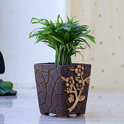 Chamaedorea Plant In Flower Embossed Pot