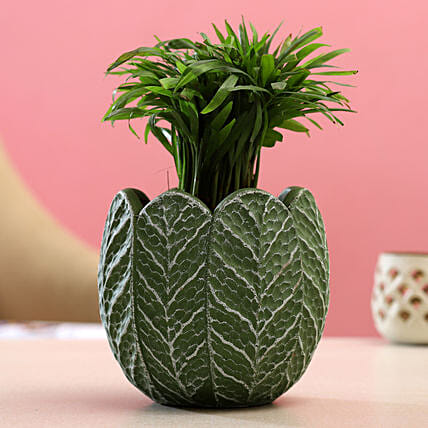 Chamaedorea Plant In Green White Ceramic Pot