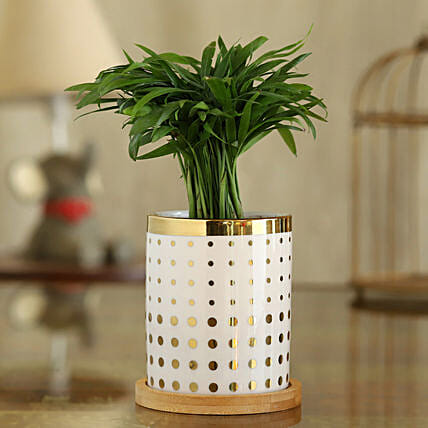 Chamaedorea Plant In Polka Dot Pot With Wooden Plate:Send Mother's Day Plants