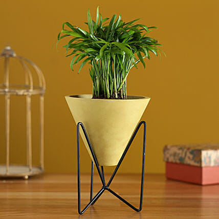 Chamaedorea Plant In Triangular Pot With Stand