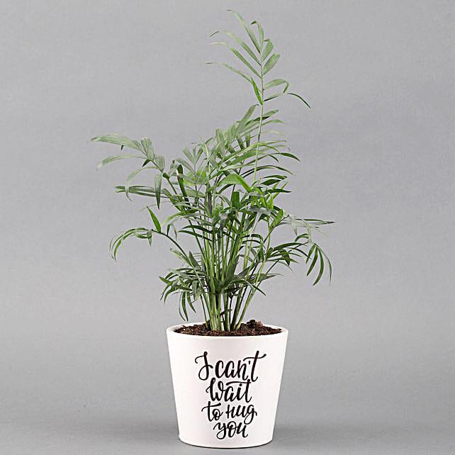 shamaedorea plant with pot for valentine day