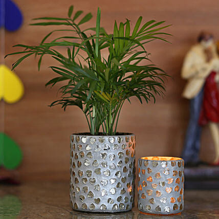 online green plant with planter for home décor