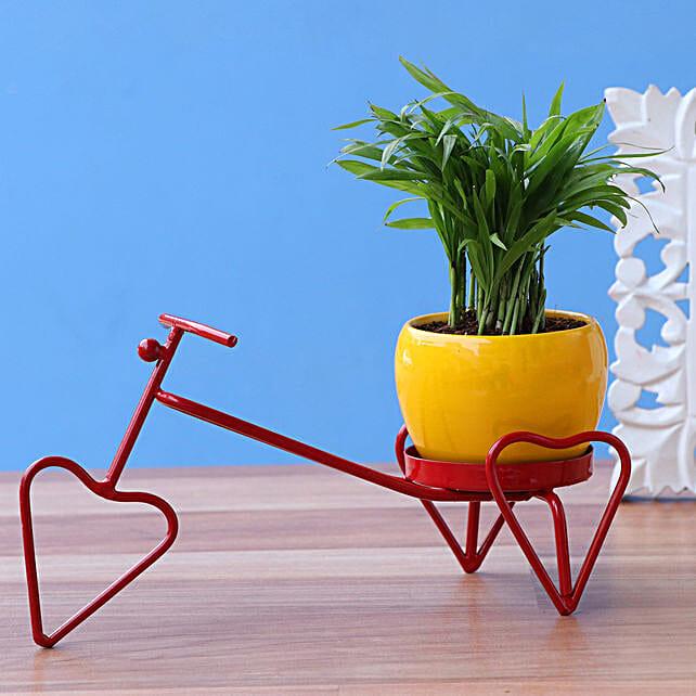 Chamdaorea Plant In Yellow Pot On Red Heart Rickshaw