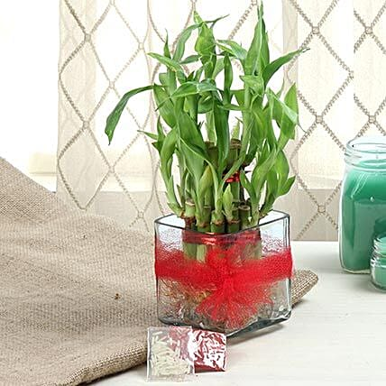 Two layer bamboo plant in a glass vase