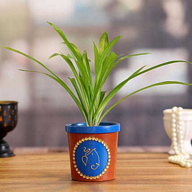 Chlorophythum Plant in Blue Terracotta Pot