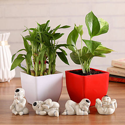 Lucky Plants & Budhhas Combo:Marriage Anniversary Gifts