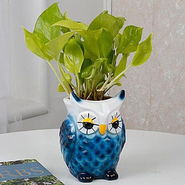 money plant in unique vase