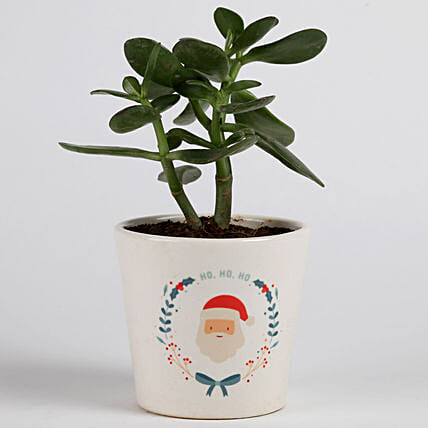 green plant in printed pot for christmas