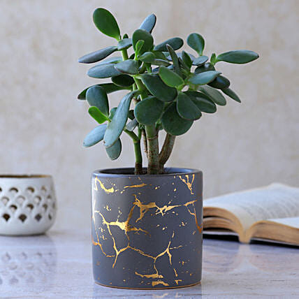 Crassula Plant In Cylindrical Pot:Egyptian Art-planters