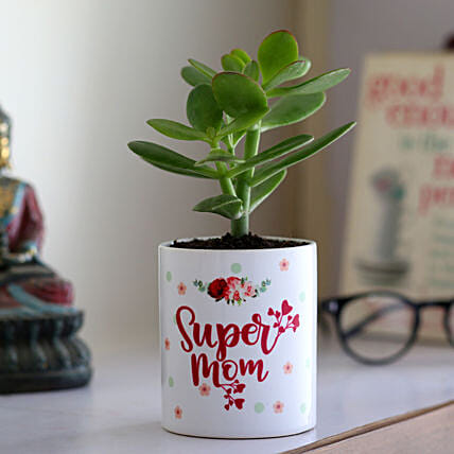 Crassula Plant In Super Mom Ceramic Planter