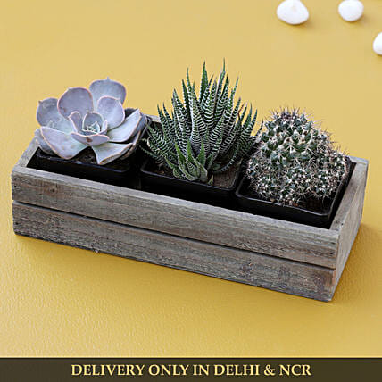 plant in wooden tray:Buy Dish Gardens