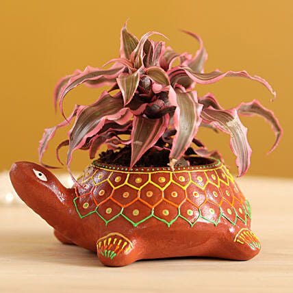 Cryptenthus Plant in Hand-painted Turtle Planter