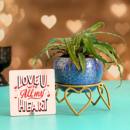 Crypthensus Plant In Pretty Blue Pot Love Special Table Top:Flowering Plants For Valentine's Day