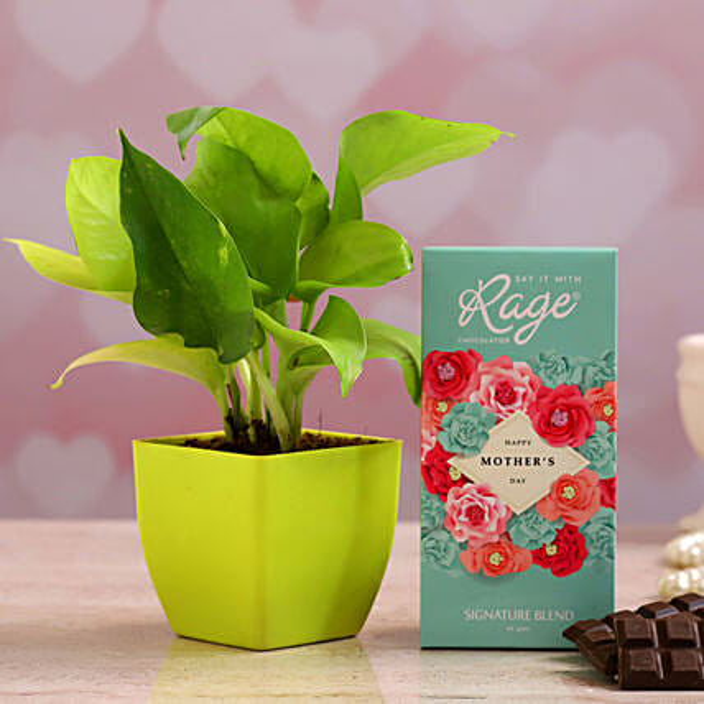 Dear Mom Chocolate Money Plant