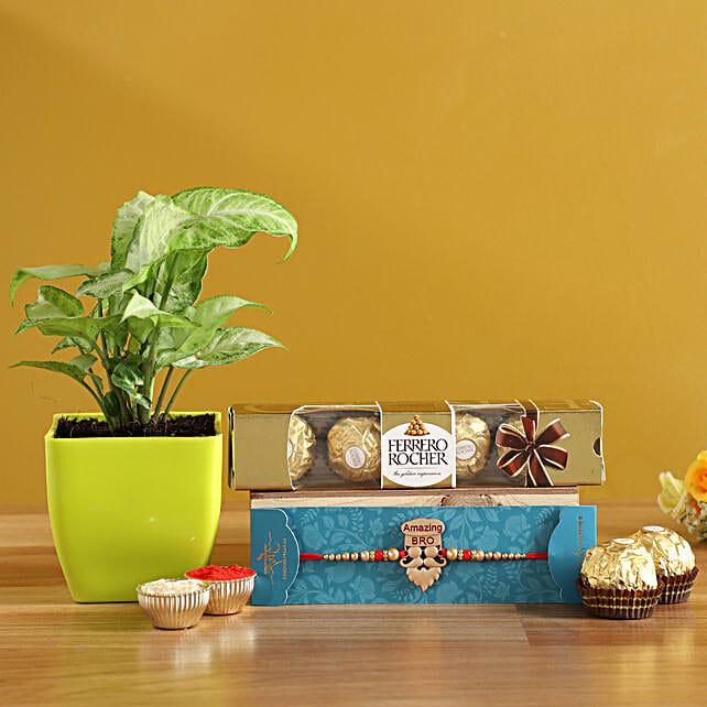 Designer Rakhi N Syngonium Plant With Ferrero Rocher