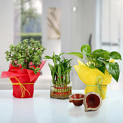 Diwali Special Set of 3 Good Luck Plants