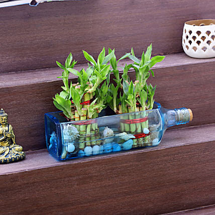 Double Lucky Bamboo Bombay Sapphire Bottle Planter