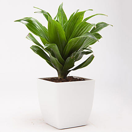 online green plant for home
