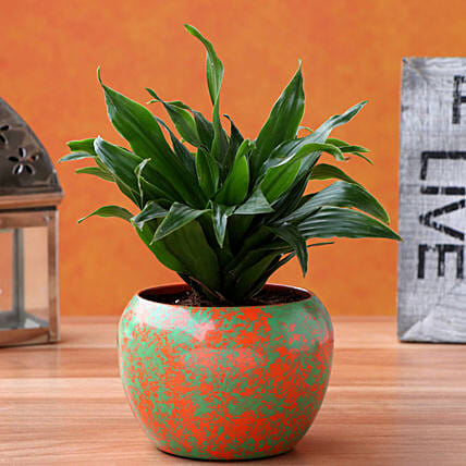 Dracena Plant In Orange Green Abstract Metal Pot