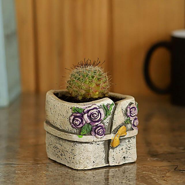 Echeveria Plant in Resin Pot