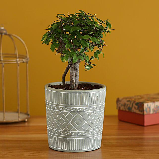 Elm Carmona Plant In Tribal Ceramic Pot:Bonsai Plants